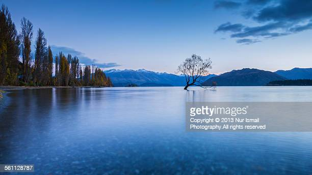 Lonely Tree Wanaka - Sunrise