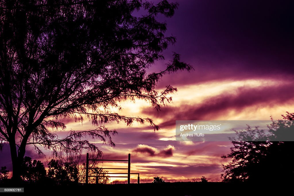 Lonely tree with sunset background : Stock Photo
