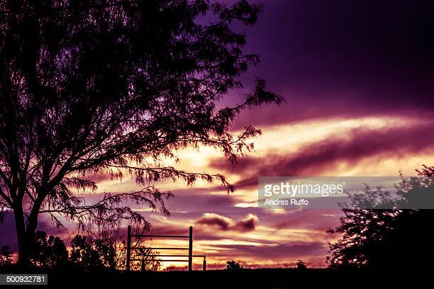 lonely tree with sunset background - andres ruffo stock-fotos und bilder