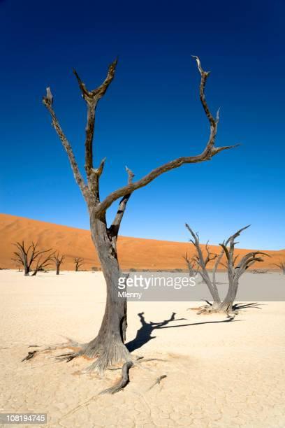 Lonely Trees Desert Landscape