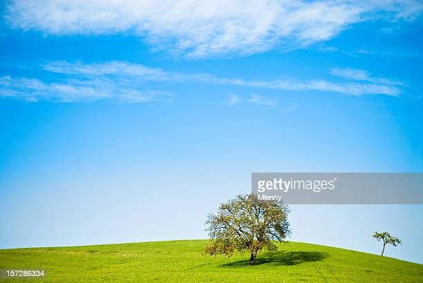 lonely trees - mlenny stock pictures, royalty-free photos & images