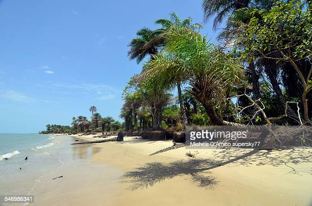 Lonely tropical beach with palms