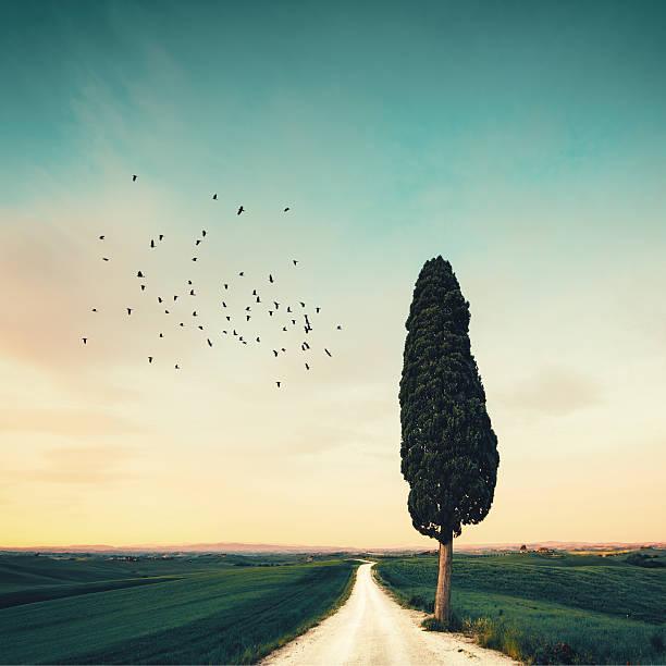 Lonely Tuscany Road Wall Art