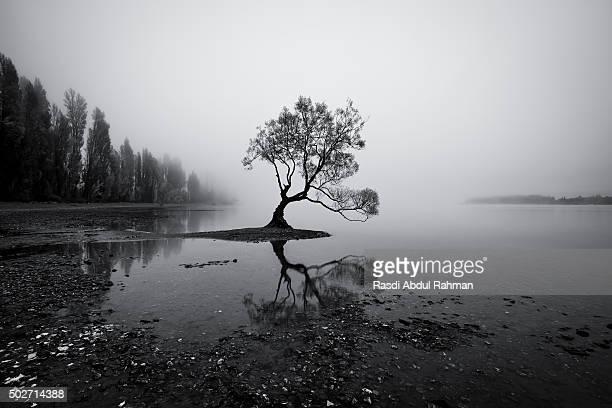 lonely willow tree of lake wanaka, new zealand - lago wanaka - fotografias e filmes do acervo