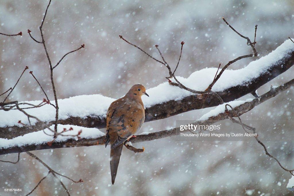 Lonesome Dove : Stock Photo