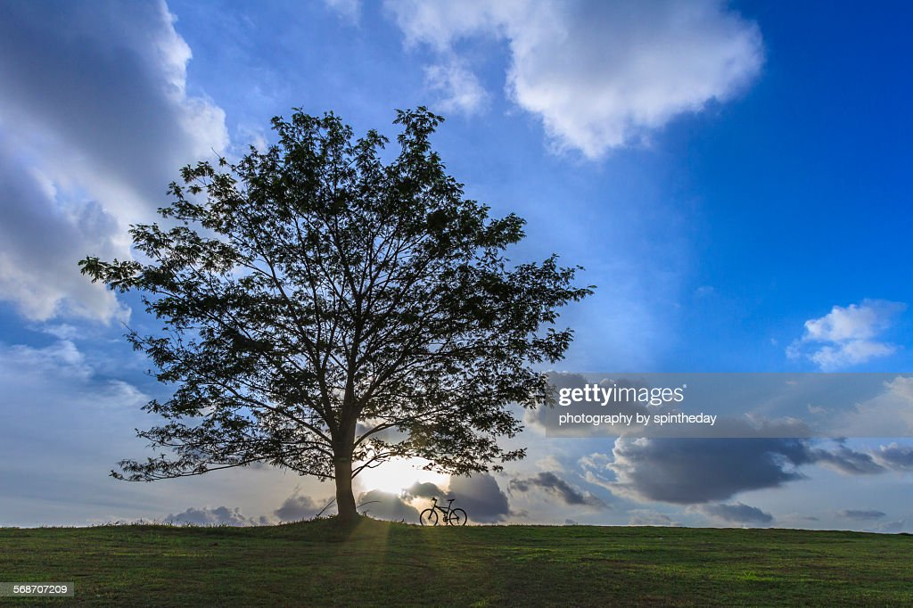 Lonesome tree : Stock Photo