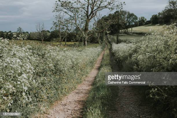a long dirt track disappearing into the distance - national wildlife reserve stock pictures, royalty-free photos & images