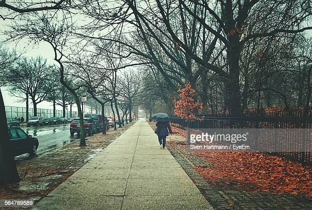 Long Empty Pathway Along Bare Trees