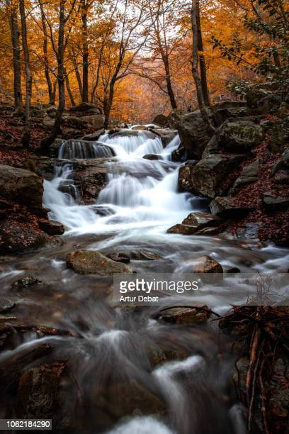 long exposure of a beautiful autumn beech forest during falling with creek. - paisaje espectacular fotografías e imágenes de stock