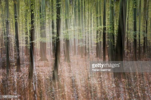 Long exposure of a deciduous forest on November 03 2018 in Diehsa Germany