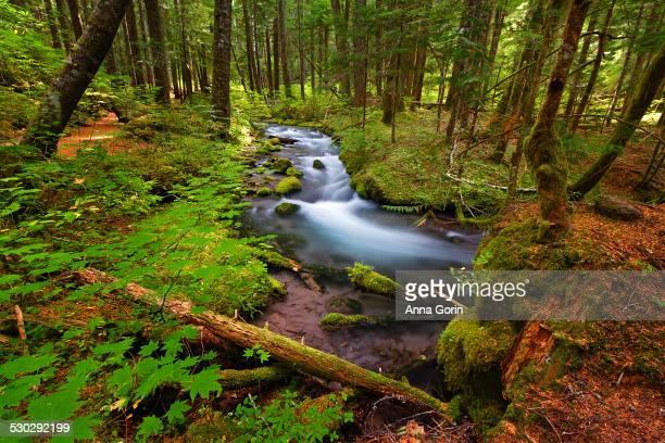 Long exposure of creek in Mt Hood NF, Oregon