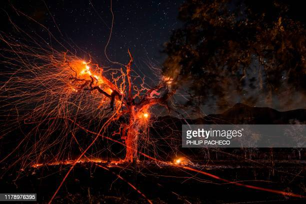 TOPSHOT A long exposure photograph shows a tree burning during the Kincade fire off Highway 128 east of Healdsburg California on October 29 2019...