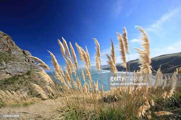 Long grass blowing in wind