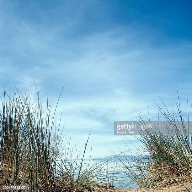 Long grass on sand dune, outdoors, close-up