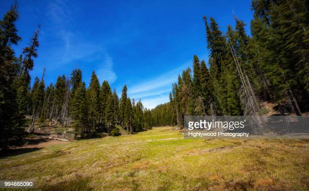 long green meadow in the forest - highlywood stock photos and pictures