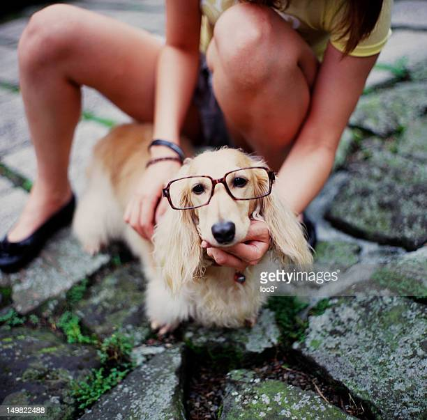 Long haired Dachshund with glasses