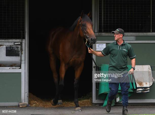 Long Leaf is seen parading during a stable call at Flemington on February 23 2018 in Melbourne Australia Long Leaf from Lindsay Park racing is...