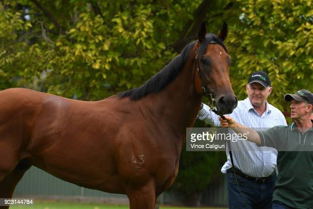 Long Leaf is seen parading with trainer David Hayes during a stable call at Flemington on February 23 2018 in Melbourne Australia Long Leaf from...