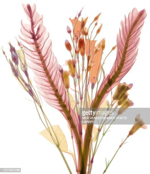 long leaves and pastel flower buds, x-ray - x ray image stock pictures, royalty-free photos & images