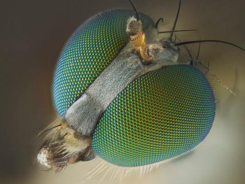 Long legged fly 182029980