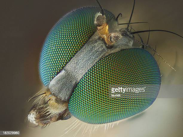 long legged fly - extreme close up stock pictures, royalty-free photos & images