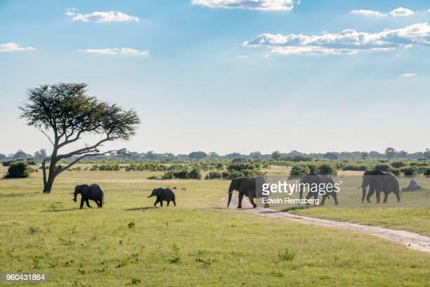long line - zimbabue fotografías e imágenes de stock