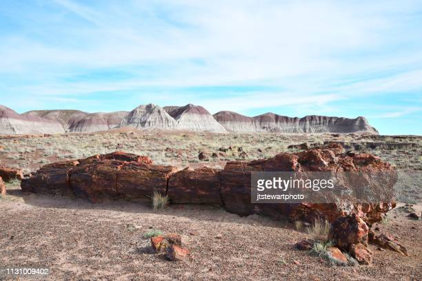 long logs, petrified forest national park - petrified wood stock pictures, royalty-free photos & images