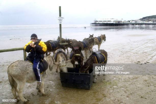 Long lunchbreak for the donkeys and twelve year old staff member Rob Margetts on a quiet wet and windy Good Friday at the beach in WestonSuperMare...