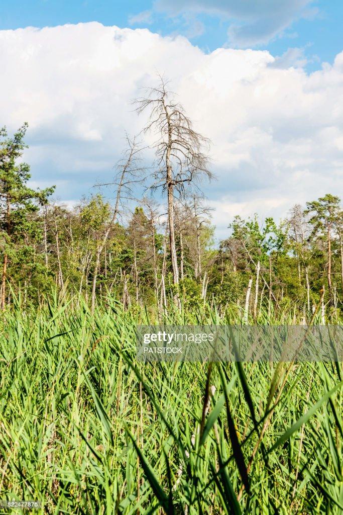 Long Mire in Kampinos National Park : Stock Photo