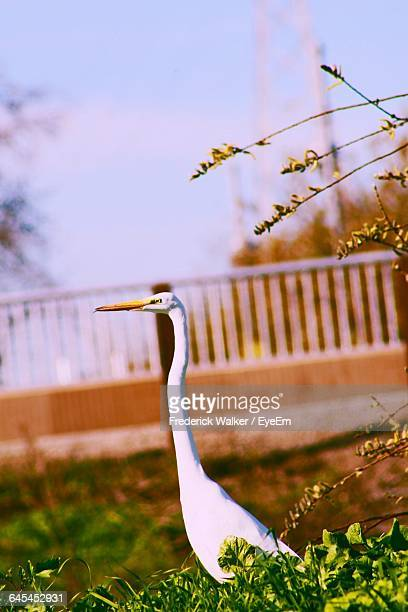 long neck bird on field - long neck animals stock pictures, royalty-free photos & images