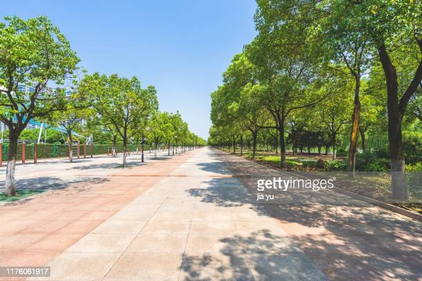 a long pedestrian walkway amidst trees against sky - parco pubblico foto e immagini stock
