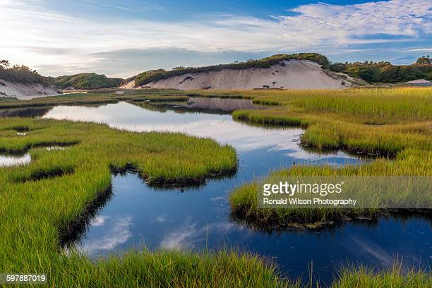Long point marsh Provincetown