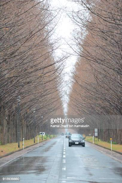 Long road and rows of trees