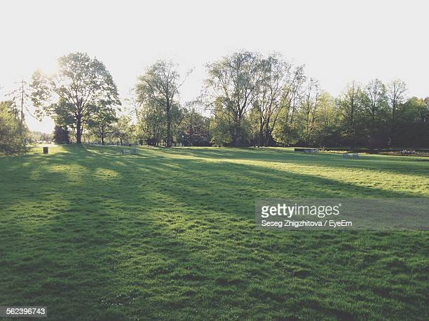 Long Shadow Of Trees In Park