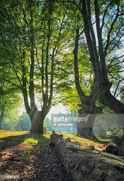 Long Shadows in Epping Forest