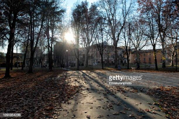 long shadows of trees in a public park in winter. - emreturanphoto stock-fotos und bilder