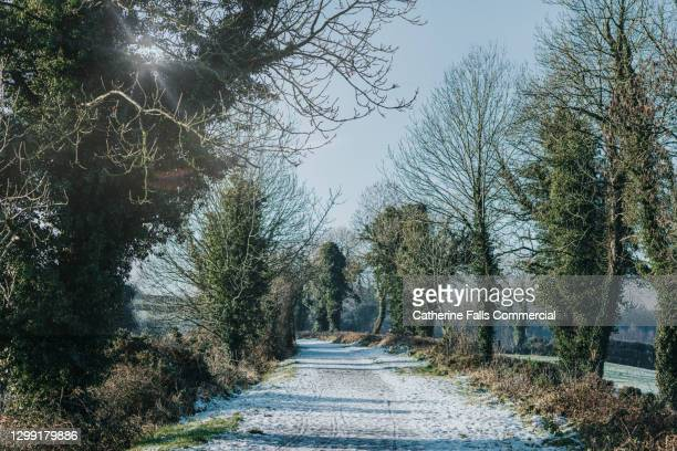 long, snowy tow path - plant part stock pictures, royalty-free photos & images