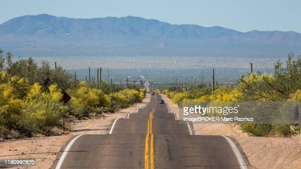 long straight road through sonora desert, tucson, arizona, usa - planchas_de_plata,_sonora stock pictures, royalty-free photos & images
