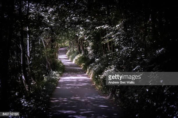 A long sunlit narrow lane through dense tree canopy