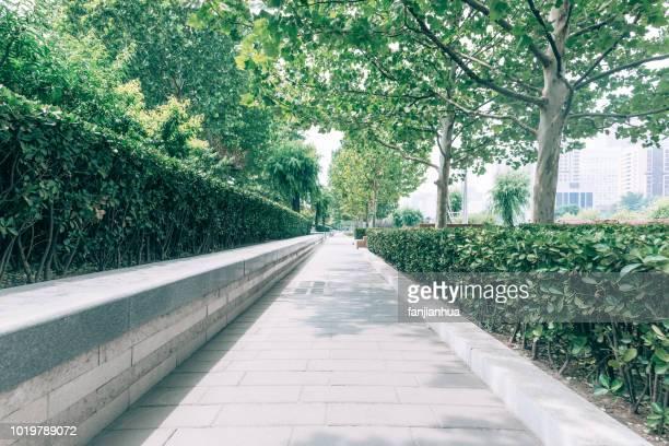long walkway amidst green trees - gehweg stock-fotos und bilder