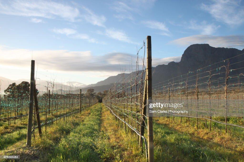 A long weekend in Boshcendal, Stellenbosch, wine country. : Stock Photo