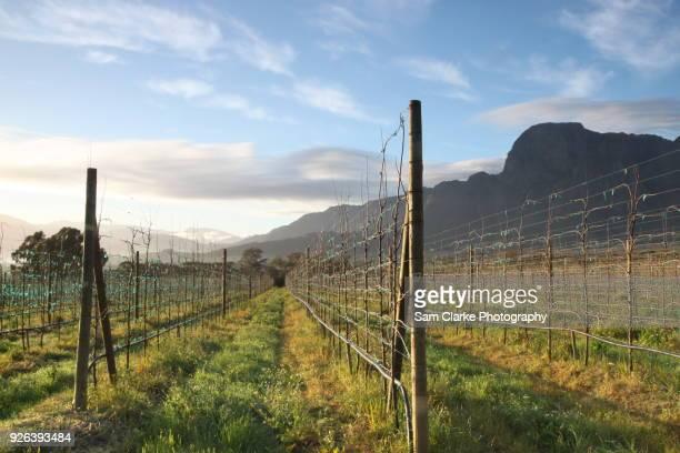 A long weekend in Boshcendal, Stellenbosch, wine country.
