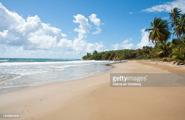 long winding surf - trinidad and tobago stock pictures, royalty-free photos & images