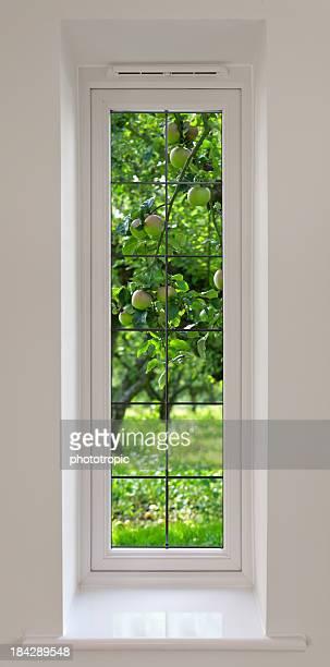 long window and apple trees