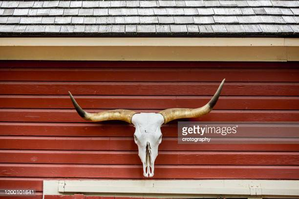 longhorn cattle horns hanging on the outside of a red barn, texas, usa - texas longhorns stock pictures, royalty-free photos & images
