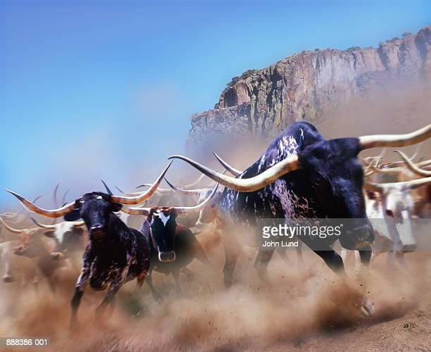 longhorn cattle running, california, usa (digital composite) - stampeding stock pictures, royalty-free photos & images