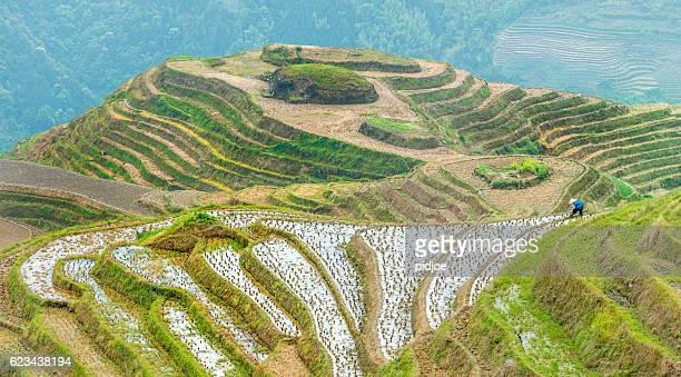 Longji terrazze di riso, Provincia Guangxi, Cina
