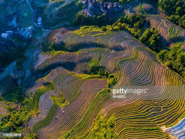 longji terrassierten felder in longsheng, guilin, china - reisterrasse stock-fotos und bilder