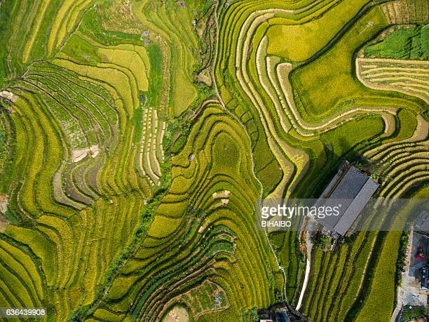 longji terraced fields in longsheng,guilin,china - paddy field stock pictures, royalty-free photos & images