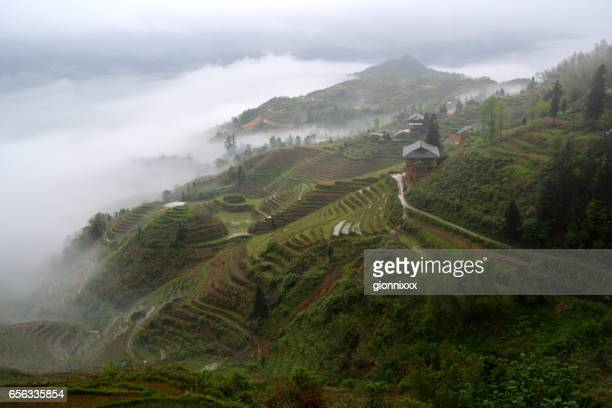 Longsheng Dragon's backbone Rice Terraces, Guangxi China